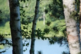 June: Bukkesjøen, Bemidji, Minnesota
