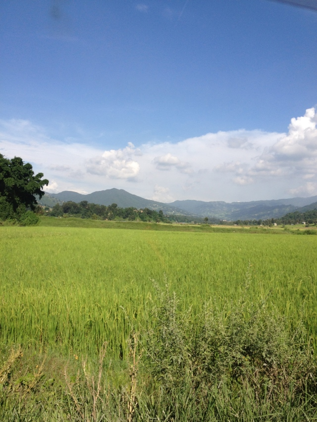 Rice fields in the Kathmandu Valley