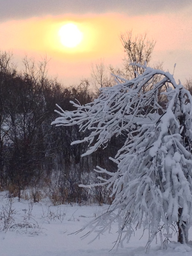 December: The things you see when you cross-country ski! Elm Creek Park Reserve, Minnesota