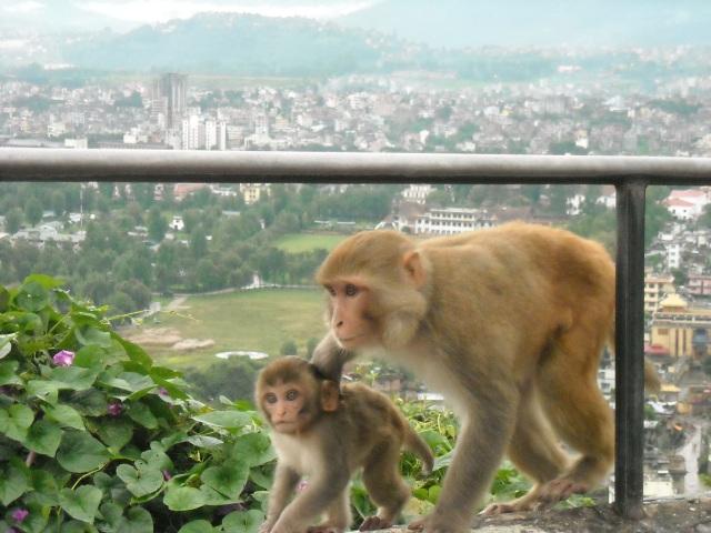 Looking down on Kathmandu, Nepla